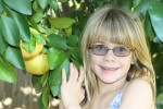 Citrus Picking