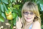 Citrus Picking