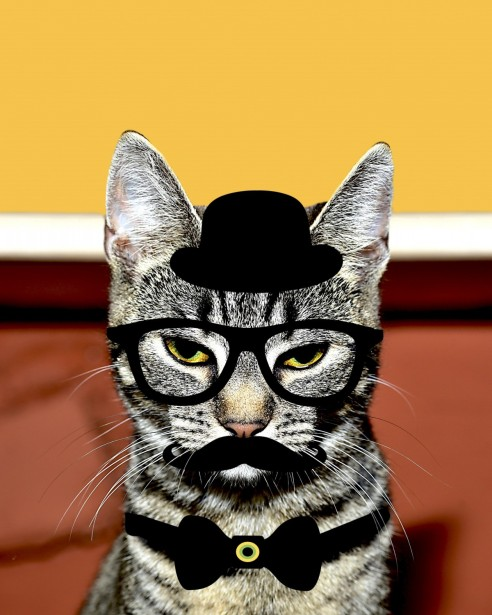 cat_feline_kitty_whiskers_black_hat_spectacles_eye_glasses_moustache-600916
